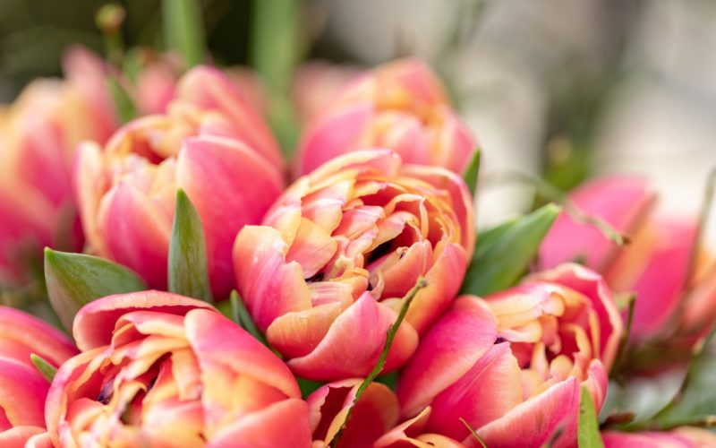 Blumen Obertshausen