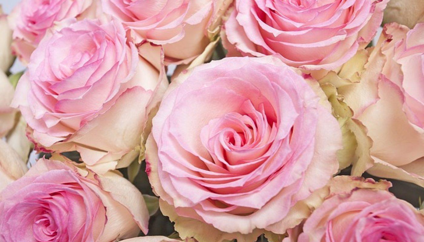roses-966856_640